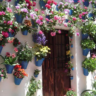 Blog flowers 3