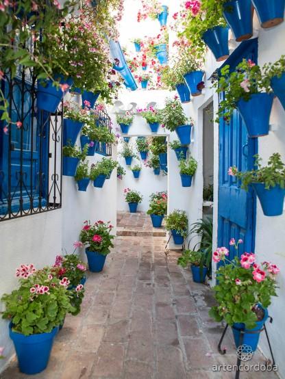 Blog flowers 4