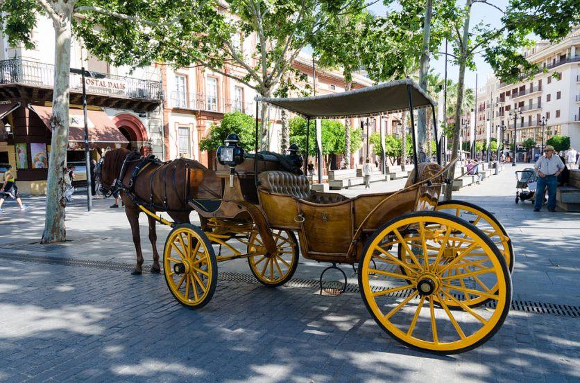 Blog - Seville horse